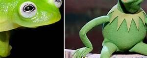Meet Kermit the Frog's Lookalike | DAPs Magic