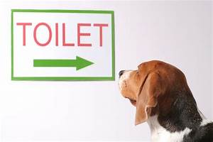 House training 101 for Dog potty training problems