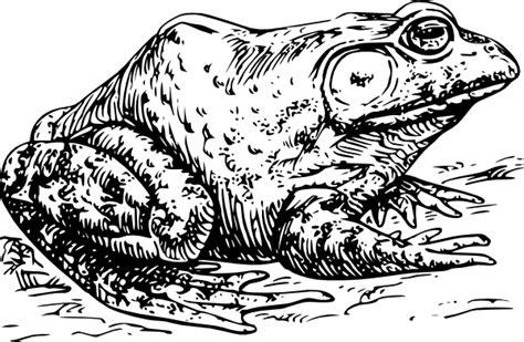 Bullfrog Clip Art Free Vector / 4vector