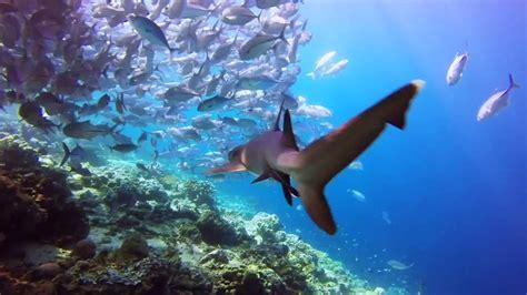 Dive Sipadan the best diving sipadan island sabah borneo malasia