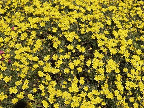 flowerbeds  background texture flowers ground