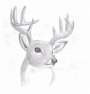 Realistic Deer by shademist030 on DeviantArt