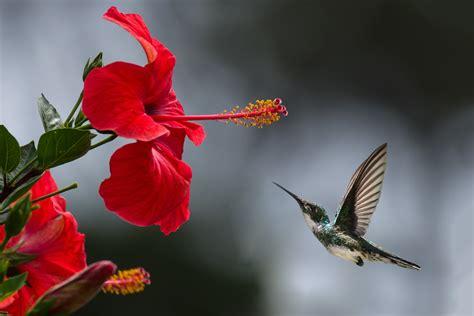 beautiful beautiful flowers  pexels