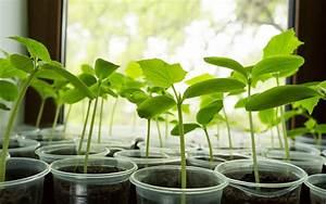 definition plante vasculaire futura planete With superb site de plan de maison 2 graine de lune