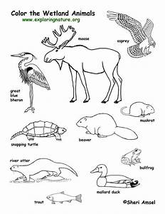 Ecosystem Coloring Pages#483976