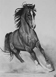 Running Horse Pencil Drawings