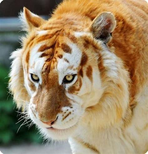 Rare Animals Worlds Beautiful