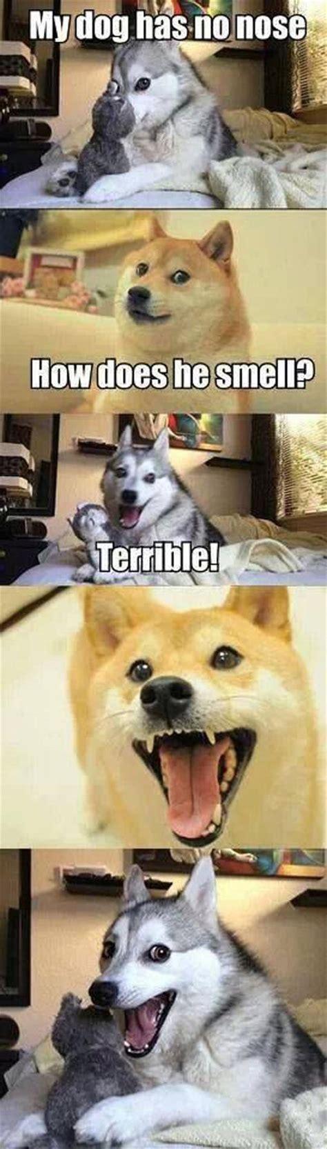 funny dog joke meme dump  day