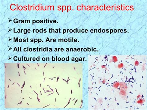spore forming