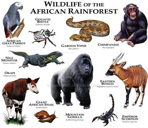 rainforest animals list what animals live in the amazon