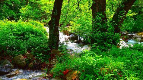 wallpaper beautiful summer forest green trees rocks