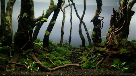 Aquascape Forest by Forest Aquarium Aquascape Day 75