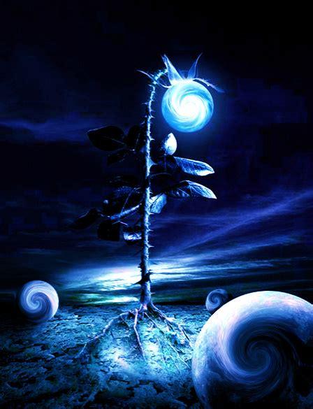 the moon flower by blueangel16 on deviantart