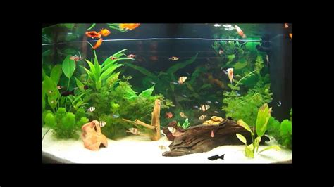 d 233 coration aquarium eau douce