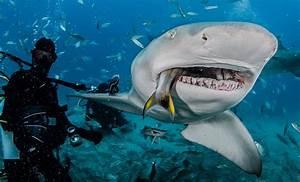 How often do sharks eat? - The Super Fins