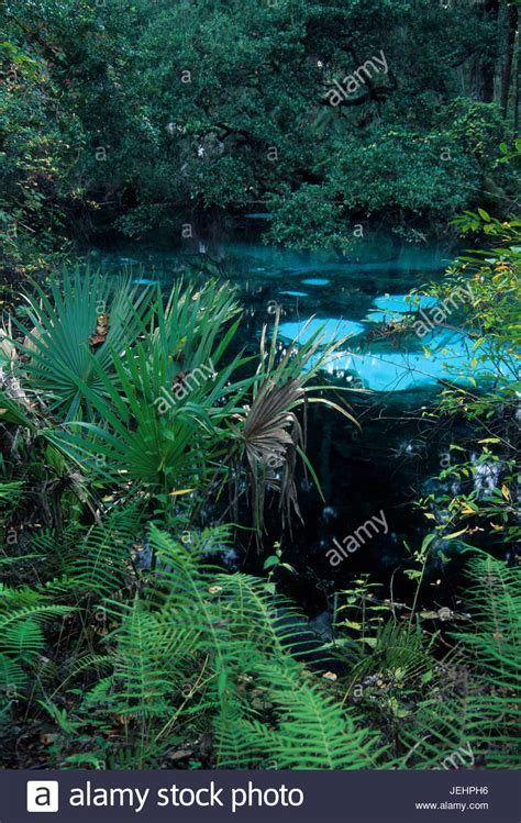 Fern Hammock Springs by Fern Hammock Springs Juniper Springs Recreation Area