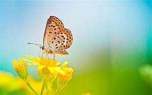 Butterfly Wallpapers Image - Wallpaper Cave