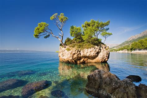 nature tree rock sea view image paradise travel wallpaper