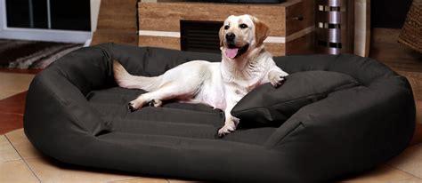 tappeti per cani tappeti cuscini e cucce per cani