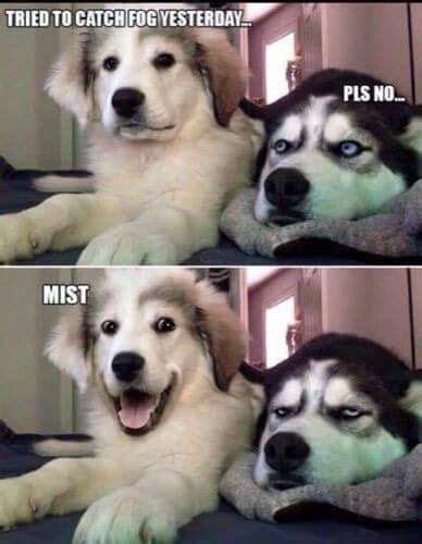 catch fog mist hahaha animal jokes dog