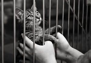 Animal Behavior - Fort Worth Weekly