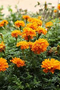 The 15 Best Annual Flowers You Need To Plant In Your Yard