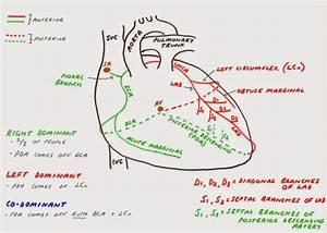 Hunting The Culprit 2  Coronary Artery Anatomy In 2020