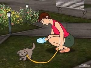 Problemática Excremento de Perros En Las Calles - YouTube