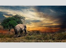 Elephant 4K Wallpaper HD Wallpaper Background