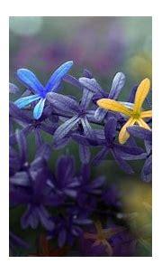 [31+] Spring Colorful Wallpapers on WallpaperSafari