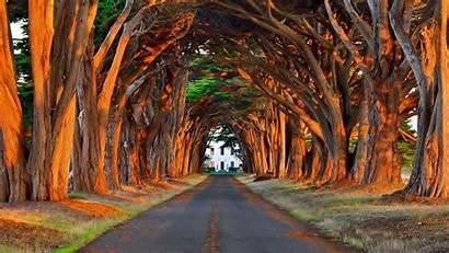 Driveway Lined Fantastic 1080 1920 Tree