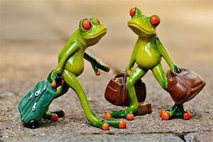 Frosch Bilder Lustig : kostenloses foto fr sche lustig reise koffer kostenloses bild auf pixabay 897387 ~ Whattoseeinmadrid.com Haus und Dekorationen