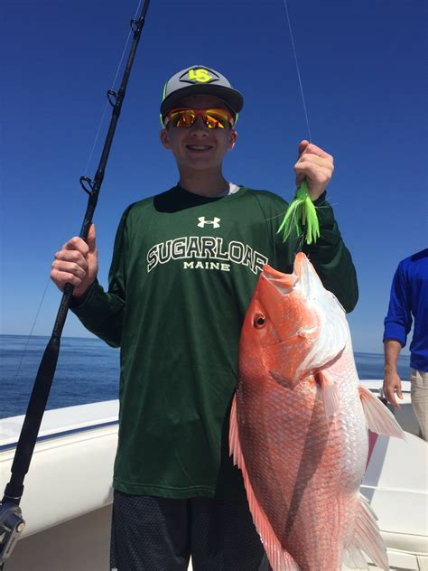 jigs grouper snapper cobia