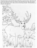 Coloring Deer Mule Pages Buck Hunting Doe Books Wood Printable Adult Sheets Adults Carving Animal Drawings Browning Cartoon Whitetail B4k sketch template