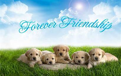 Forever Friends Friendship Wallpapers Whatsapp Friend Cards