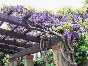 Pergola Pour Plante Grimpante : pergola bois plante grimpante ~ Premium-room.com Idées de Décoration