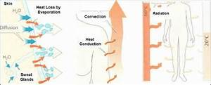 Heat Loss Via Evaporation  Convection  Conduction  And