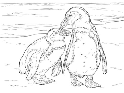 african penguins coloring page  printable coloring pages