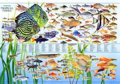aquaticszone march