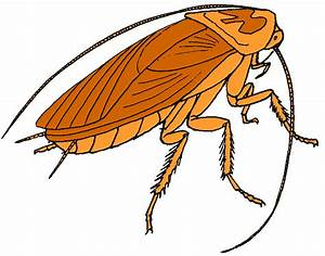 Pest Control Diary: Bad Diseases Infected By Cockroach