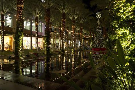 pool city christmas trees arizona shopping mall tree and lighted palm trees stock image image of