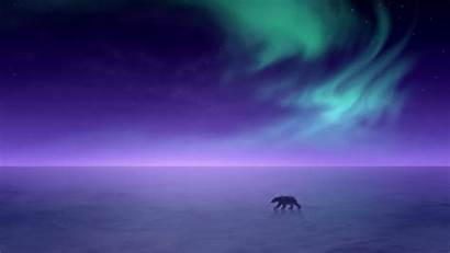 Aurora Borealis Lights Northern Polar Bear 1440