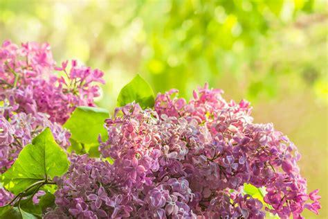 Pflegeleichte Pflanzen Garten. Garten Pflegeleichte