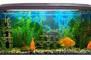 déco aquarium poisson