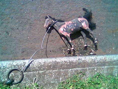 glue factory horse horses little