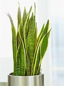 Zimmerpflanzen Feng Shui : zimmerpflanzen im gleichgewicht gawina feng shui pflanzen raumbegr nung zimmerpflanzen ~ Indierocktalk.com Haus und Dekorationen