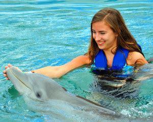 dolphin odyssey miami