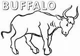 Buffalo Coloring Pages Animal Buffalo3 Coloringway sketch template