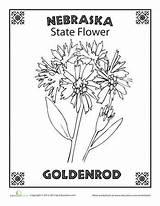 Flower Nebraska State Coloring Worksheets Sheets Dakota Worksheet Education Science Oregon Adult Goldenrod Rushmore Studies Social Bird sketch template