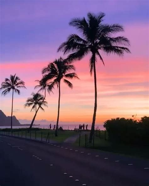 pin  flo williams  palmeras    images